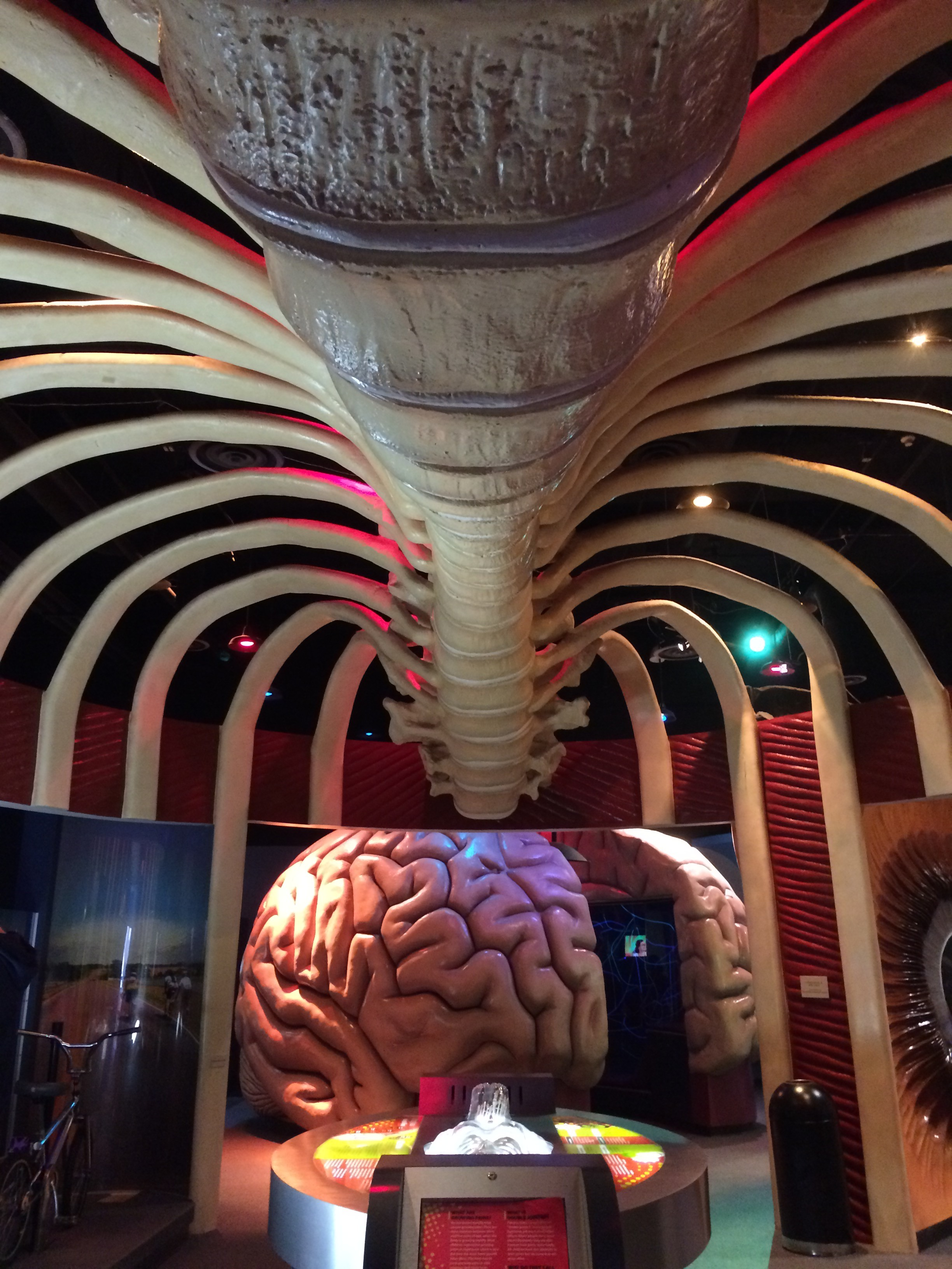 The Health Museum, HoustonA Fistful of Neurons